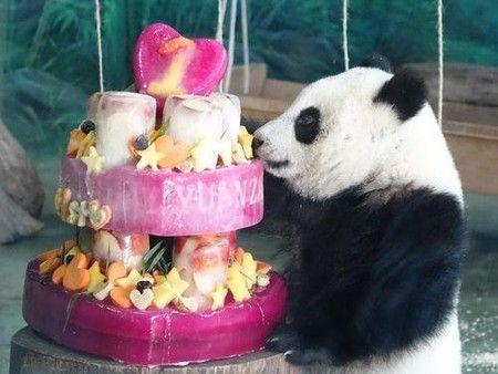パンダの赤ちゃん満1歳  1年間で185倍に成長/台湾