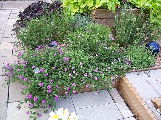 280 Best Central Texas Garden Images On Pinterest | Decks, Plants And  Potager Garden
