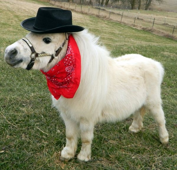 17 Best Images About Horse Dress Up On Pinterest Rabbit
