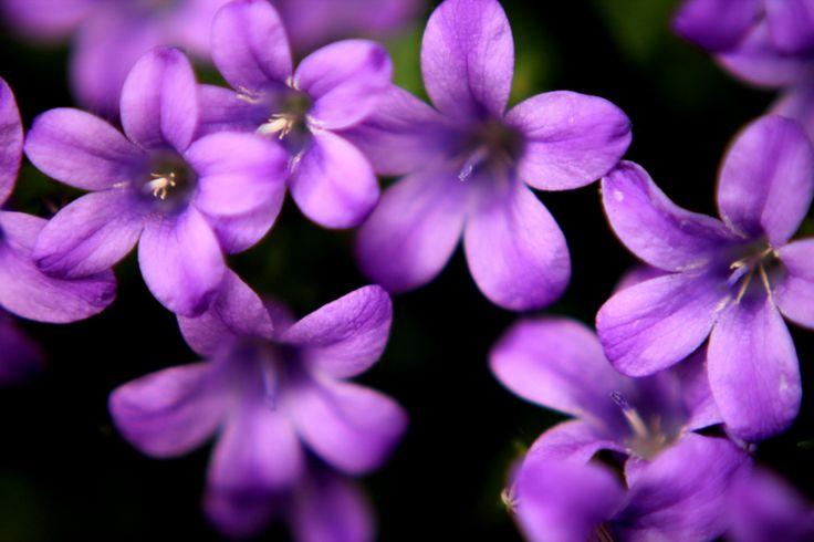 #fiori #viola #piccolini