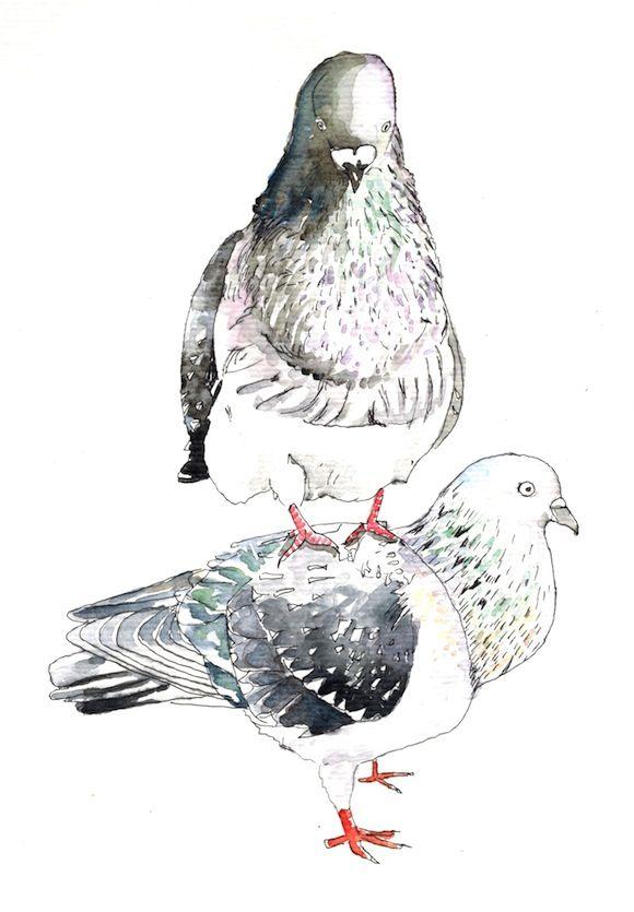 53 Best Pigeons Images On Pinterest