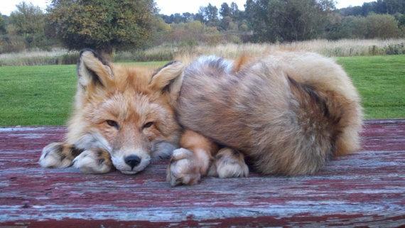 Soft sculpture taxidermy, fox
