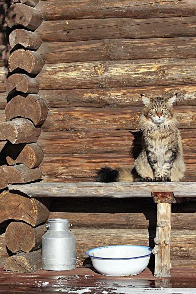 Kissoilla on kevättä rinnassa. Katso lisää kuvia klikkaamalla kuvaa.   Kuva: Jarmo Kontiainen