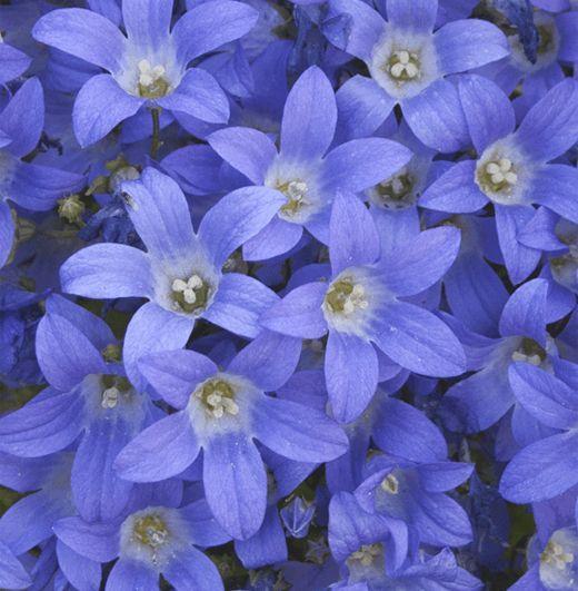 62 best blue garden images on pinterest blue garden cottage
