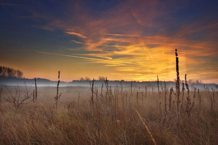 Castricum Dunes The Netherlands
