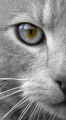 Ojo de gato cat eye