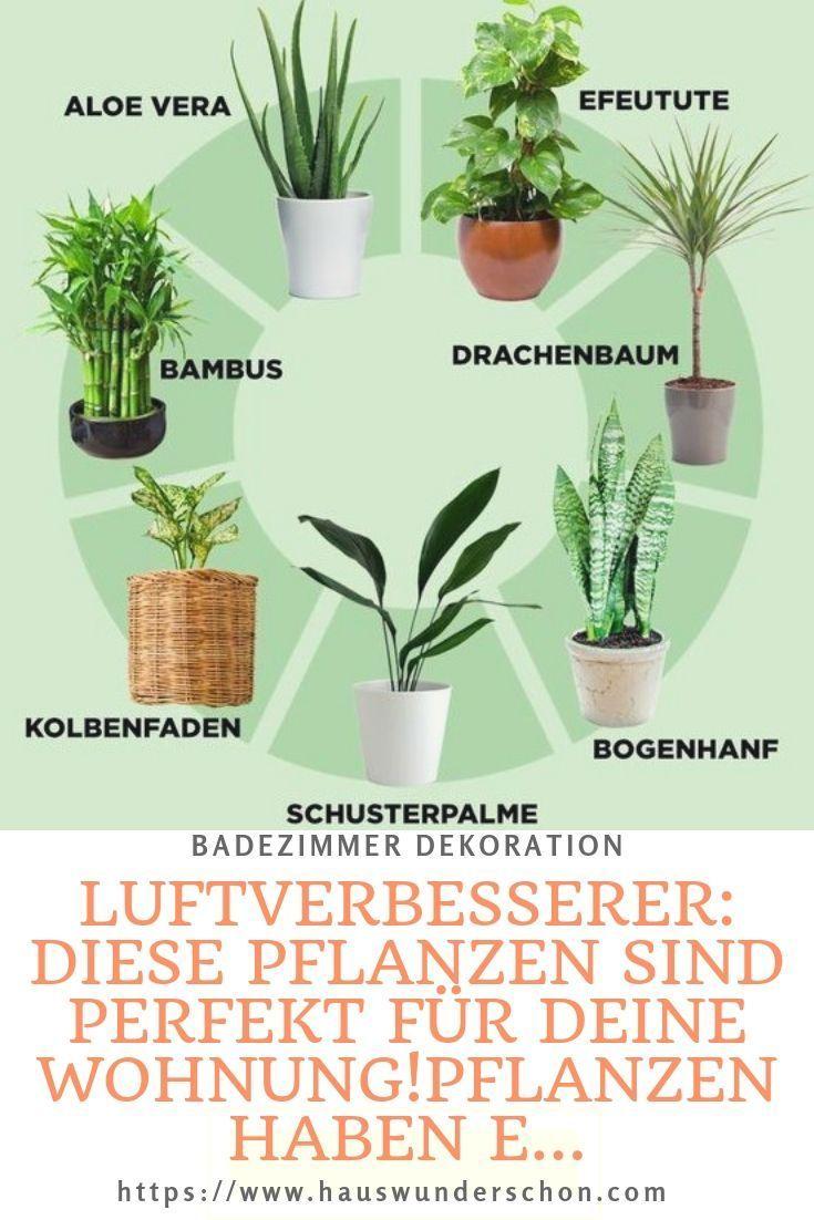 Luftverbesserer Diese Pflanzen Sind Perfekt Fur Deine Wohnung Pflanzen Haben E Plants Home Brewing Air Freshener