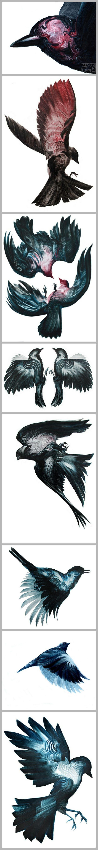 Adam S. Doyle #birds