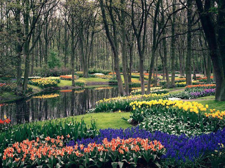 1309 Best Garden of Eden/Sustainability images in 2020 | Garden ...