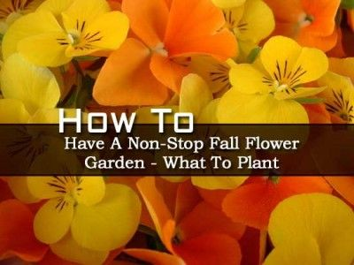 How To Have A Non-Stop Fall Flower Garden � What To Plant
