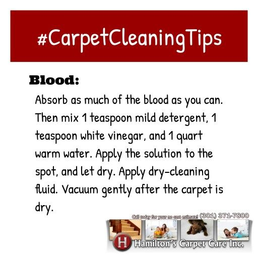 Getting Headache of What To Do To Remove Blood Stains on Your Carpet? Here is how...  Blood: Absorb as much of the blood as you can. Then mix 1 teaspoon mild detergent, 1 teaspoon white vinegar, and 1 quart of warm water. Apply dry-cleaning fluid. Vacuum gently after the carpet is dry.  ****************************************************** www.HamiltonsCarpetCare.com  Call 301-371-7800  Text 240-674-0021  #carpetcleaning #carpetcleaners #rugscleaning #professionalcarpetcleaners…