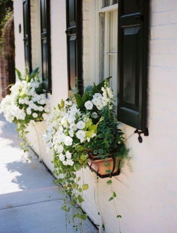 Blumenkasten An Der Fensterbank Weisse Petunien Viel Grun