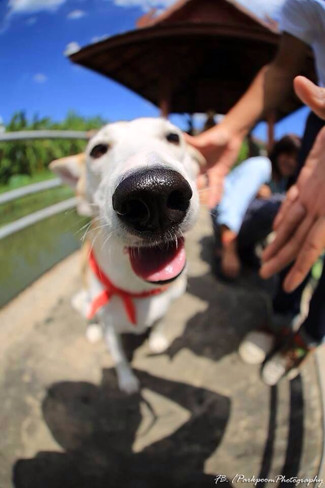 Best Gluta Smile Images On Pinterest Happy Dogs Rescue Dogs - Meet gluta the smiling dog that beat cancer