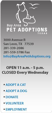 Adopt, Donate, Volunteer at Bay Area Pet Adoptions/SPCA