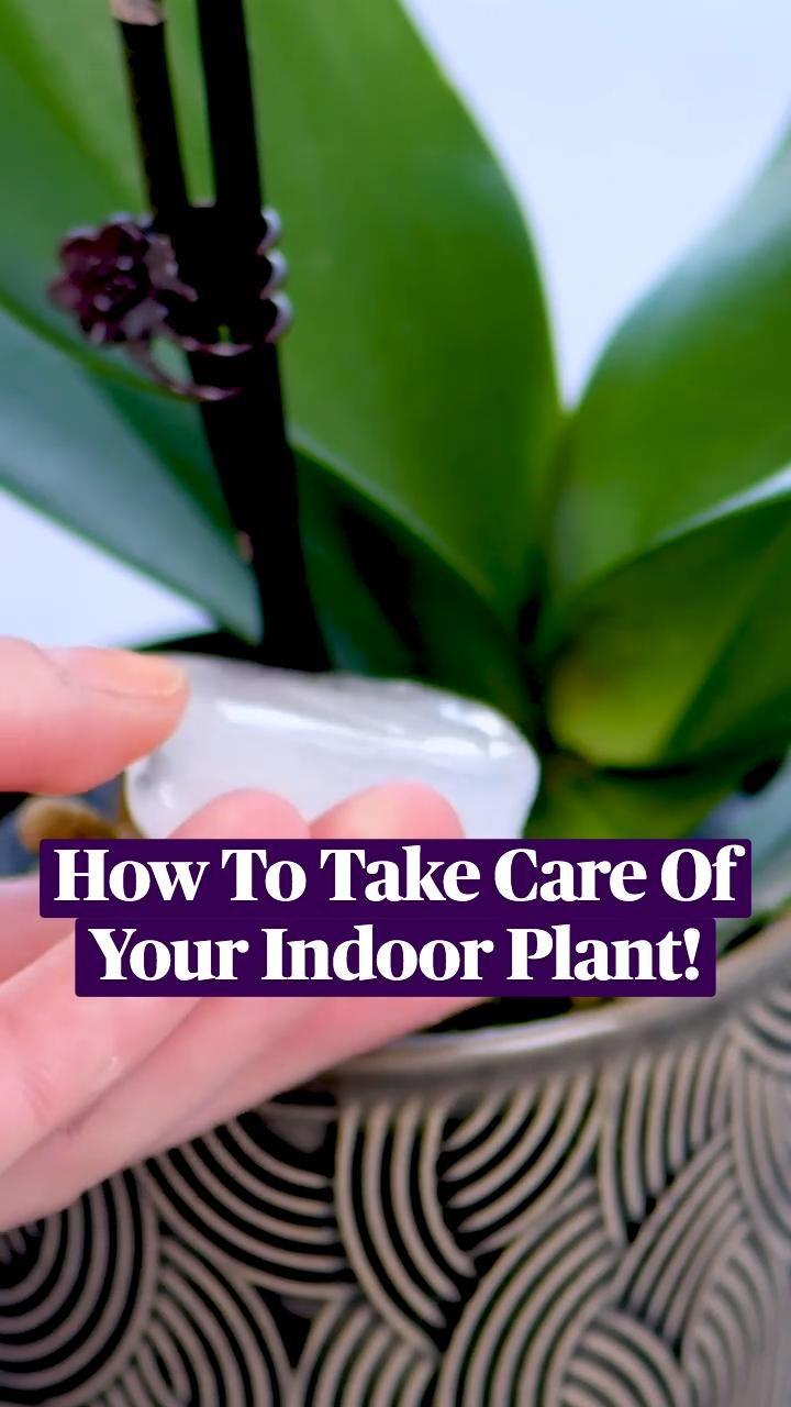 Lawn And Garden, Indoor Garden, Garden Plants, Indoor Plants, House Plants, Outdoor Gardens, Orchid Plant Care, Orchid Plants, Container Gardening