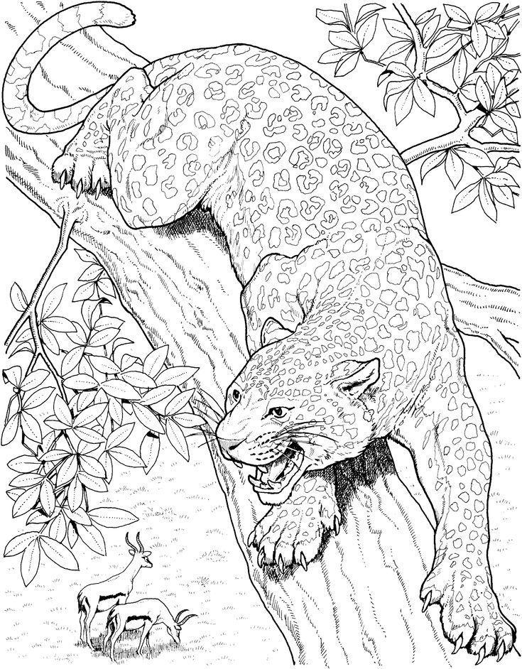 Printable Big Cat Jaguar Coloring Pages Ilustrasi Seni Burung