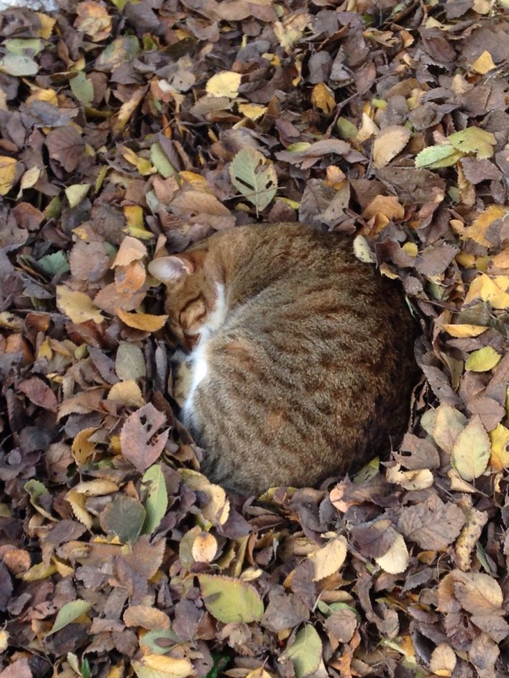 Cat in camouflage