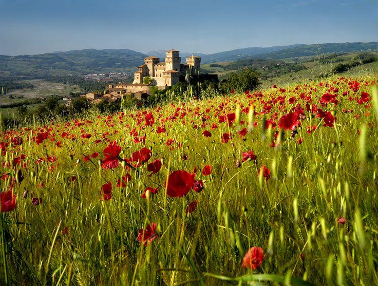 Castello Torrechiara con papaveri - Langhirano, Emilia-Romagna