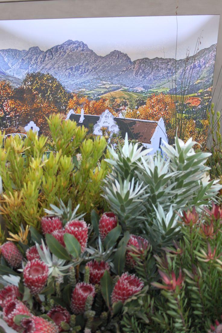 @ Chelsea blommeuitstalling, Suid-Afrika ( South Afrcan exhibit at the Chelsea Flower Show)