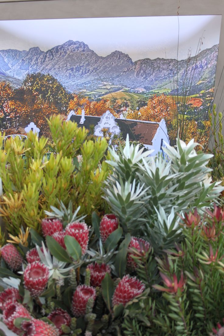 @ Chelsea blommeuitstalling, Suid-Afrika ( South Afrcan exhibit at the Chelsea Flower Show)