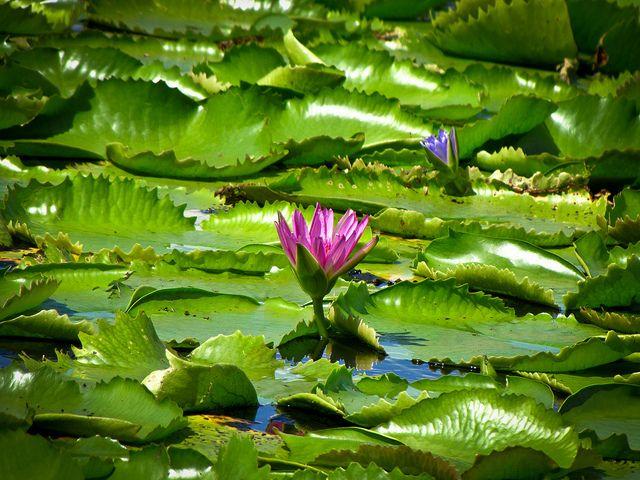 Lago Brea en Trinidad y Tobago