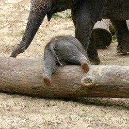 For the first week of July, the cute animal of the week is cute baby elephants. Elephants are extremely playful and clever animals, which...