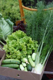 Juntras Grönt - Grönsaker Gårdsbutik Ekerö Närodlat Ekologiskt