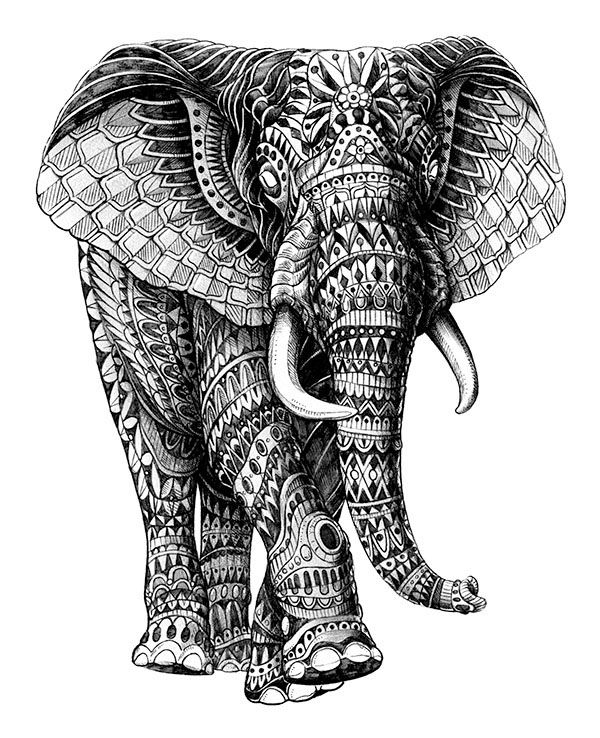 pattern coloring pages elephant see more ornate collection 2012 2013 on behance