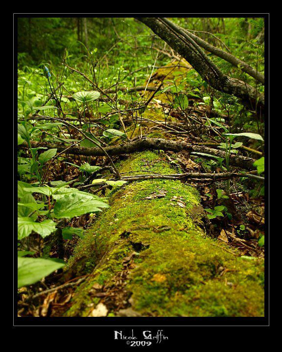 Forest floor - photography by Nicole Griffin