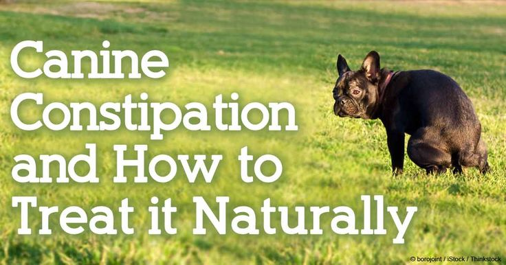 Learn about dog constipation, its causes and symptoms, and the dos and don'ts of treating a constipated dog. http://healthypets.mercola.com/sites/healthypets/archive/2010/11/11/constipation-in-pet-dogs.aspx