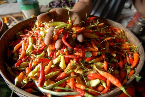 Pedasnya harga cabai di Yogyakarta