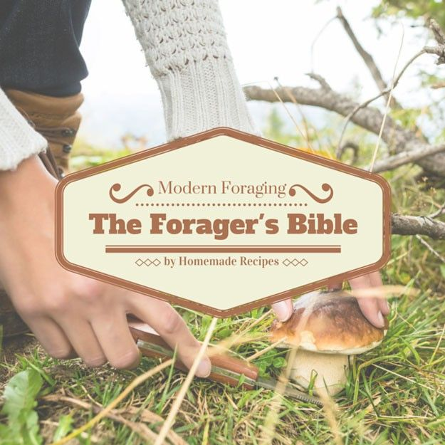 Learn how to forage for wild plants and herbs with this handbook.