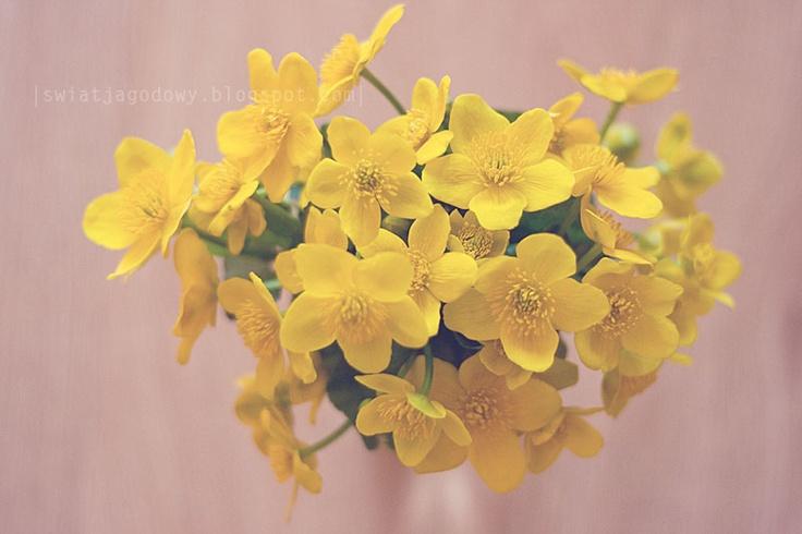 spring  spring flowers