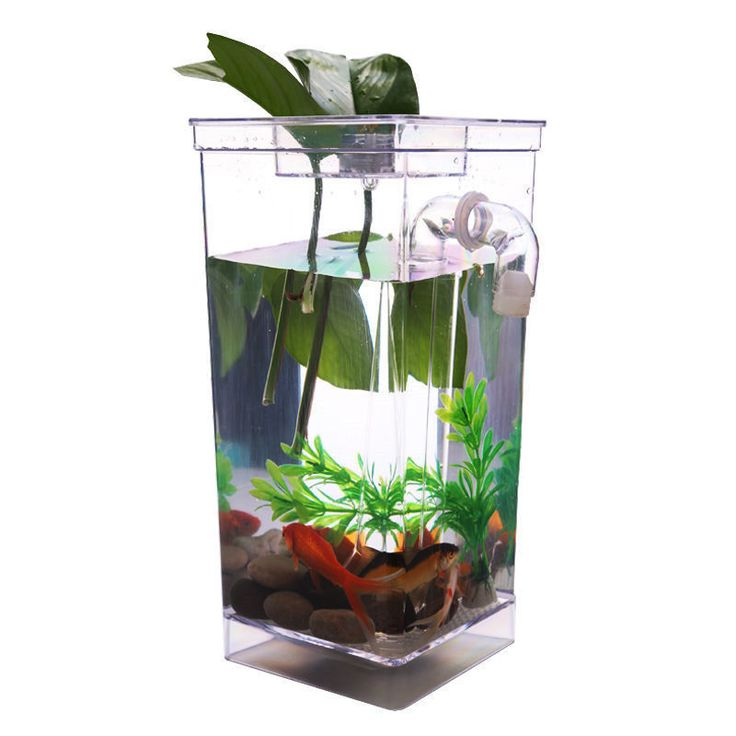Best 25 small fish tanks ideas on pinterest amazing for Best way to clean a fish tank