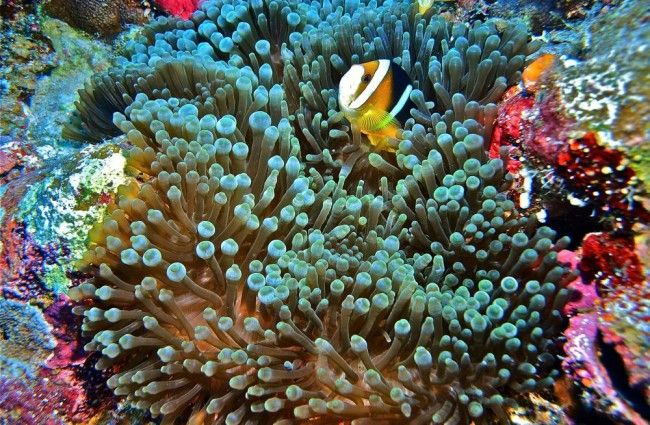 Dive in Rowley Shoals, the 'secret' Great Barrier Reef