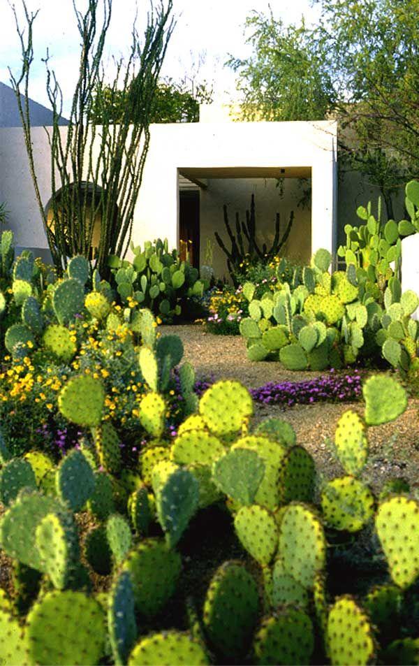 steve martino | landscape architect // jardin de cactées