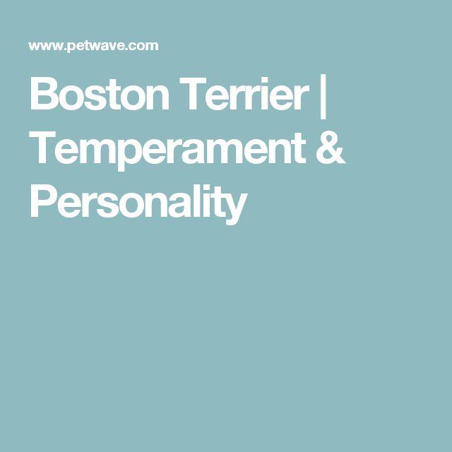 Boston Terrier | Temperament & Personality