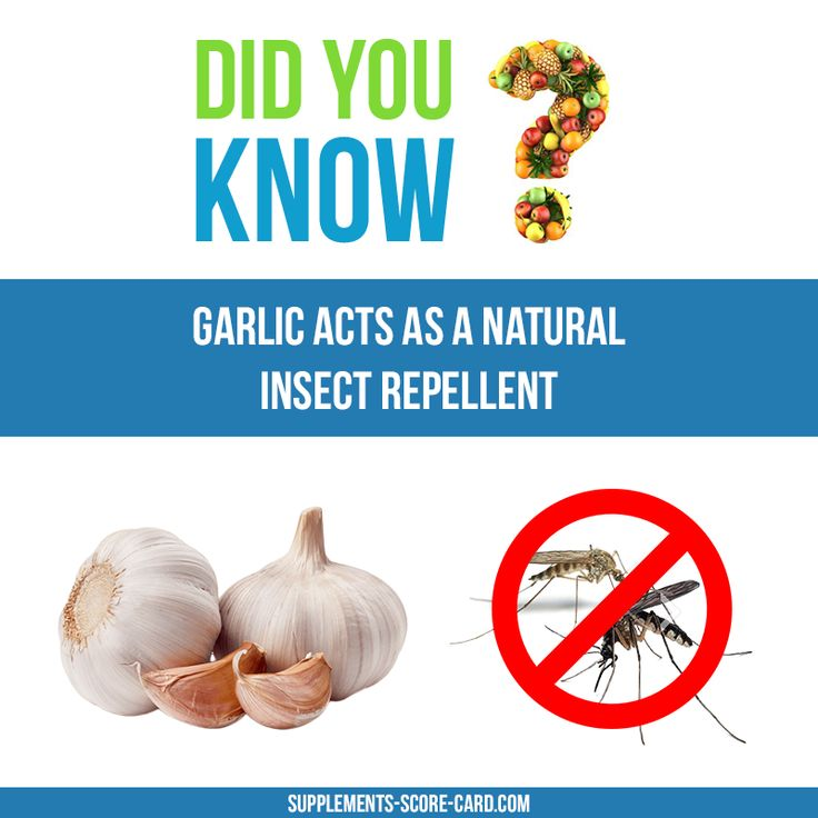Garlic as a repellent Garlic acts as a natural insect repellent  Things you didnt know about food  Supplements ScoreCard