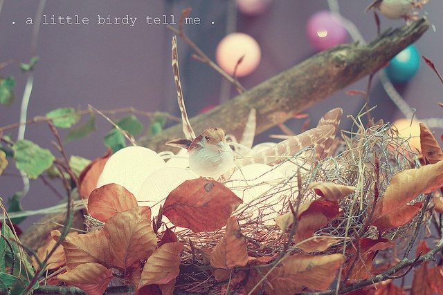 . a little birdy tell me . {P52} #47, via Flickr.