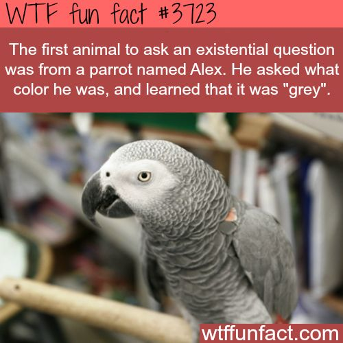 The first animal to ask a question - WTF fun facts