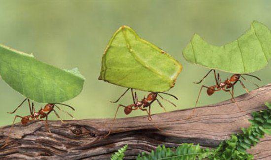Myrmecophobia  Fear of ants