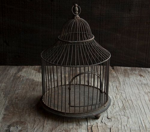 Bird Cage Images On Pinterest