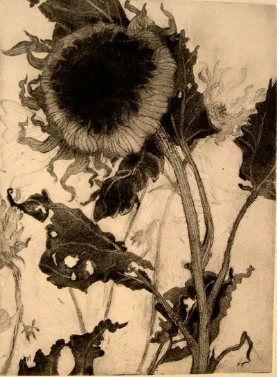 """Intaglio print by Katie Degroot; part of series of flowers and plants """"past their prime""""."""