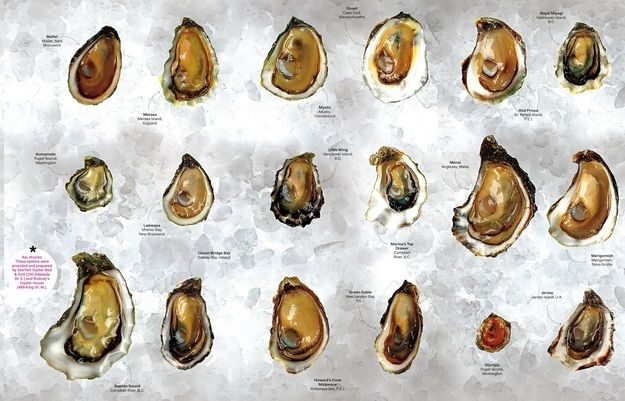 There are only 5 kinds of oysters.  | The Only 7 Things You Need To Know About Oysters