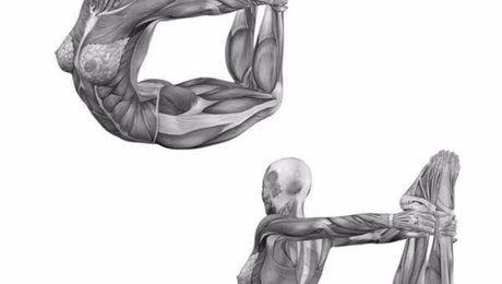«Поза лука» и еще 5 упражнений на растяжку