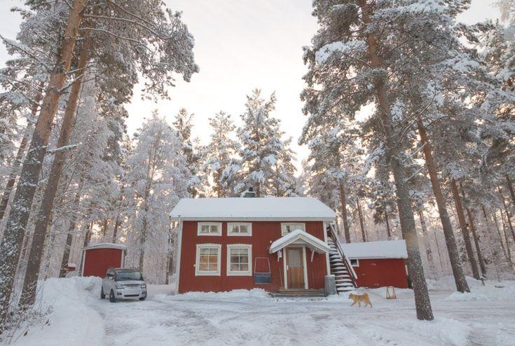 örnsköldsvik bagarstuga vedfyrt vedeldad lefser tunnbröd stuga cabin #baking #woodburning #oven #örnsköldsvik #gottne #bagarstuga #bakinghut #winterwonderland  #snow #winterlandscape #landscape #cabin #traditional #lefse #lefsebaking #tunnbröd #Nordlandslefser #tjukklefse #food #recipe #oppskrift #forest #scandinavianstyle