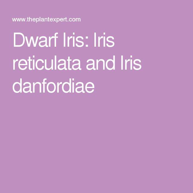 Dwarf Iris: Iris reticulata and Iris danfordiae