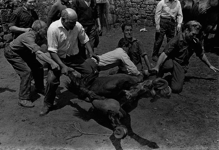 Heaquilahistoria : Rafael Sanz Lobato (fotógrafo, Sevilla 1932) A rapa das bestas (A Estrada, Pontevedra) 1970