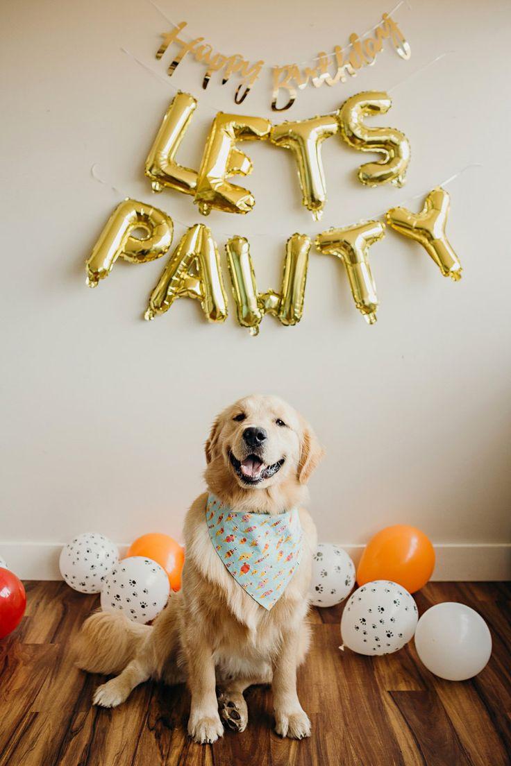 Hundes erste Geburtstagstorte zerschlagen, glücklich Golden Retriever | © Alexa Nahas Photogra …   – Featured on Daily Dog Tag