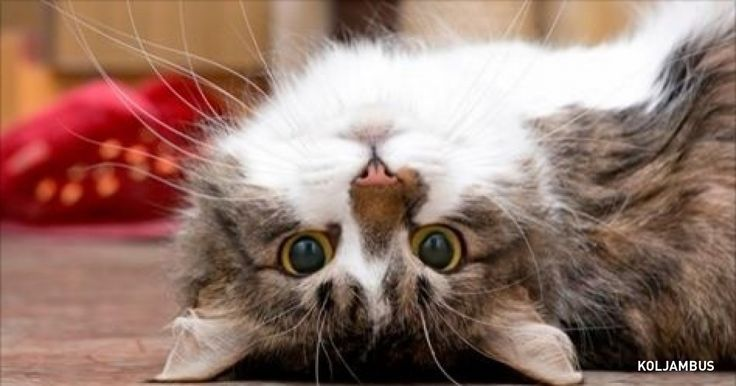 Scientists have finally explained how cats prolong our lives